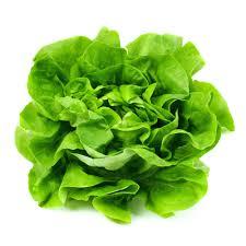 Healthsupplementproduct-Lettuce